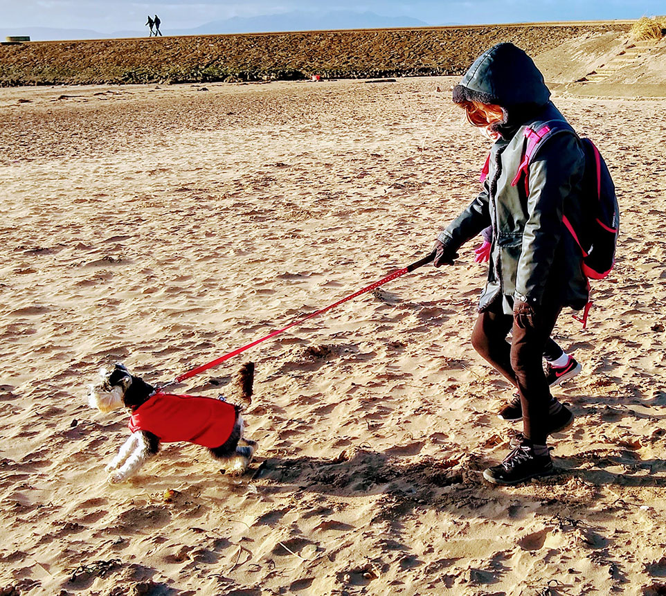 A girl walking a dog on a beach. The girl has a hood up and a backpack. The dog is a schnauzer wearing a red dog jacket.
